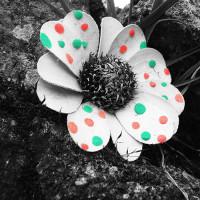Nature Imaginaire 6/7